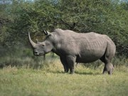 Rhino horn claim 'unfounded'