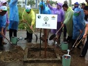 VN responds to Clean up the World campaign