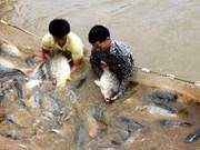 More space for aquaculture in Mekong Delta