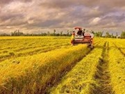 VN earns over 760 mln USD from rice exports