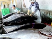 Tuna fishing faces difficulties despite growth