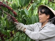 JICA plans increasing ODA for Vietnam's agriculture