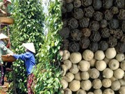 Pepper exports fetch 370 million USD in four months