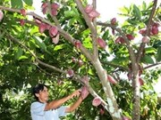 Cocoa cultivation in ASEAN discussed