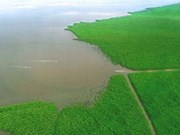 Land sinking, coastal erosion threaten Ca Mau province
