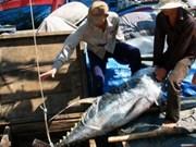 Tuna exports to Portugal enjoy impressive growth