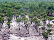Mangrove planting programme marks Vietnam-Japan ties