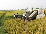Vietnam, Israel agree to deepen agricultural link