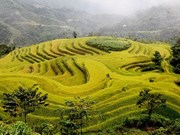 Terraced field farming culture in northern Vietnam
