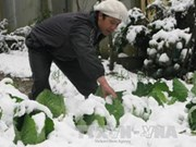 Lao Cai suffers from 1.7 mln USD losses due to snowfall