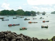 Cat Ba archipelago launches wifi service