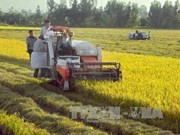 Vietnam, RoK increase agricultural cooperation