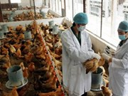 First 2014 H5N1 fatality reported in Vietnam