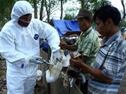 Binh Phuoc starts clean-up following H5N1 fatality