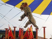 Can Tho hosts national lion dragon dance champs