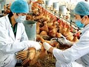 Gov't orders tightened measures to prevent bird flu