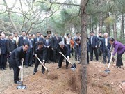 Party leader launches New Year tree planting