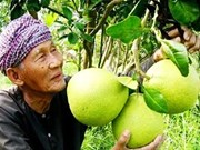 Tien Giang expands fruit growing area