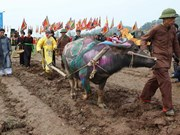 Vice President attends ploughing festival in Ha Nam
