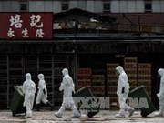 FAO warns of cross-border bird flu risk from China