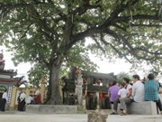 Project promotes heritage tree preservation