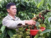 Gloomy forecast for Vietnam's coffee output
