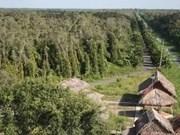 Rangers seek ways to preserve U Minh Thuong National Park