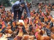 Bird flu kept under control nationwide