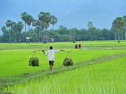 FAO helps Cambodian farmers adapt to climate change