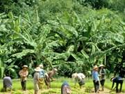 Six Thai provinces to become green urban farming areas