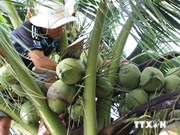 New markets for southern coconut firms