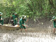 Mangrove forest conservation measures proposed