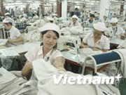 Fibre plant provides key textile inputs