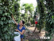 Poverty reduction project launched in Quang Nam