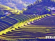 Sapa's terraced fields among world's most beautiful destinations
