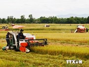 Vietnam aims for rice production restructuring