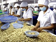 Cashew nut price expected to rise in 2015