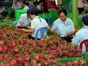 Vietnamese fruit reaches int'l markets