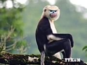 Vietnam addresses wildlife consumption