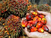 Indonesia remains world's top palm oil producer till 2020