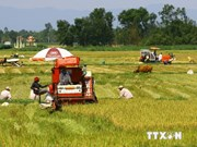 Mekong Delta sees rise in rice output