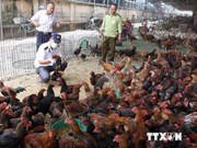 Health ministry warns risk of A/H5N8 virus spread in poultry