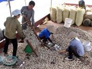 Supervision over bivalve mollusc processors intensified
