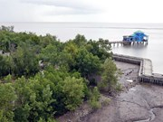 Clam farmers urged to pay for mangrove forest protection