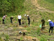 Vietnam leads way in forest protection