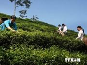 Pakistan favours Vietnamese tea
