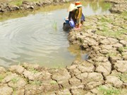Mekong Delta faces water shortage, salination