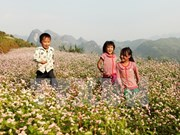Buckwheat flowers turn out a tourist draw for Lao Cai