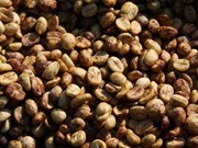 Vietnam's coffee output forecast to drop 20 percent next year