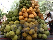 Ben Tre to host fourth coconut festival next year